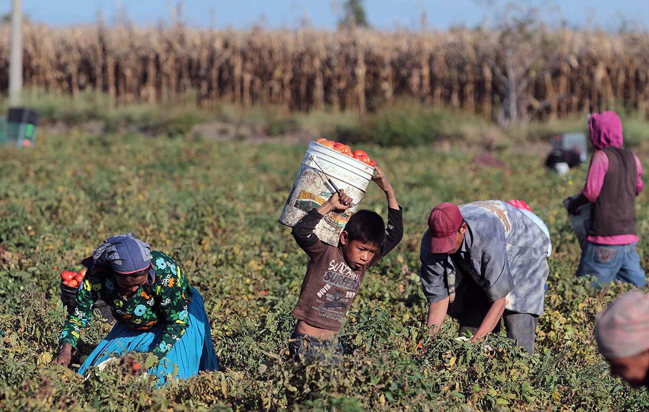 Cerraron 27 comedores para hijos de jornaleros en Sinaloa
